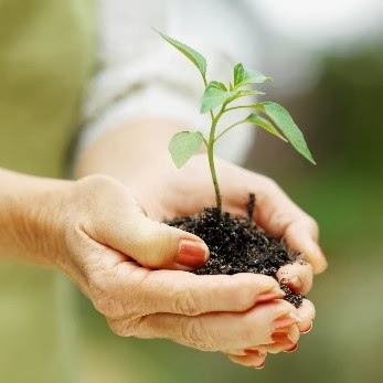 Image of hand holding a sapling